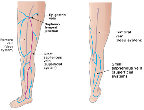 vein-diagram